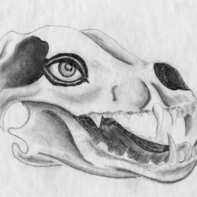 Wolf Skull pencil sketch 1