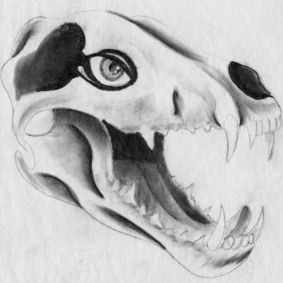 Wolf Skull pencil sketch 2