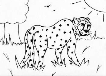 Wry Cheetah