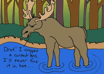 Moose (colored)