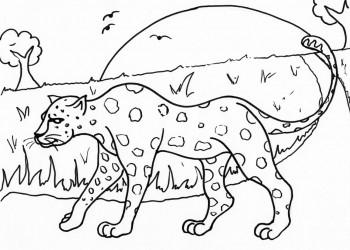 Strolling Leopard
